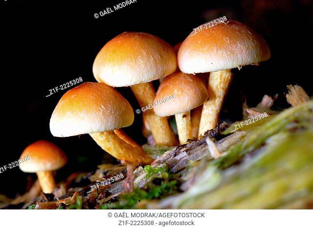 Small group of mushrooms on wood