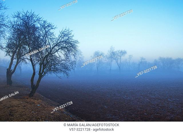Landscape in the mist. Dos Barrios, Toledo province, Castilla La Mancha, Spain