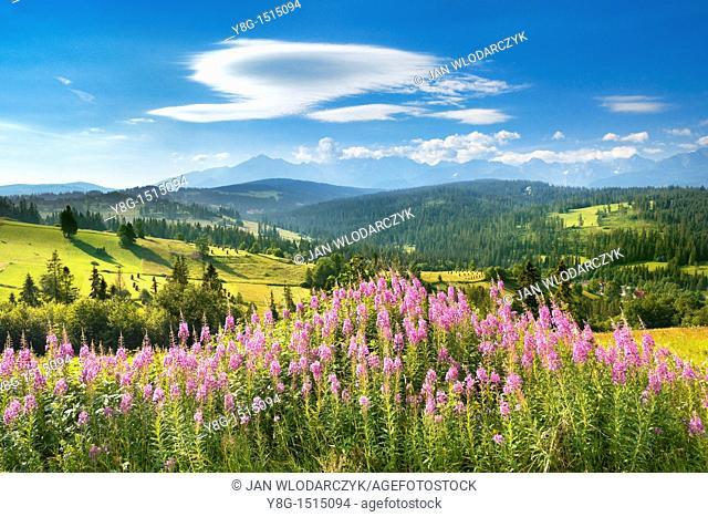 Landscape near Gliczarow village, 10km from Zakopane (Tatra Mountains Region) and 14km from Lysa Polana (border with Slovakia)