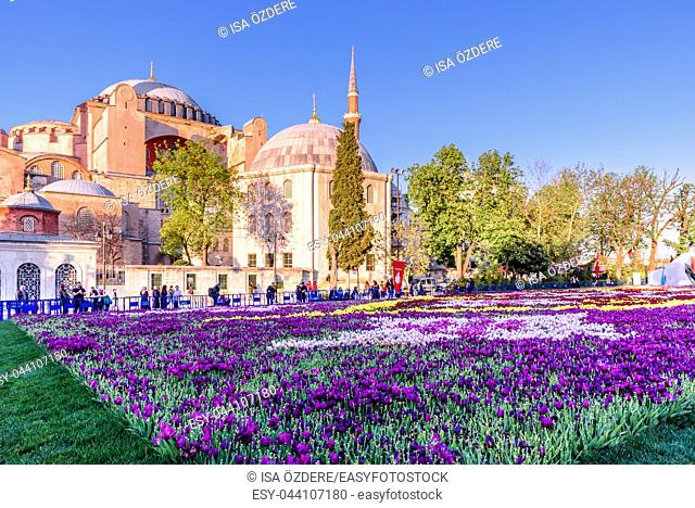 Unidentified people take pictures of Largest Carpet of Tulips of the World in Sultanahmet for tulip festival in Istanbul,Turkey. 21 April 2018