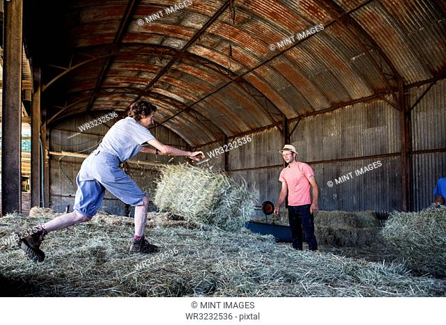 Two farmers stacking hay bales in a barn