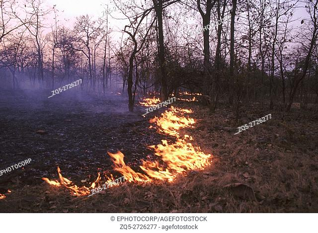 Forest fire- Nauradehi. A typical forest fire in open dry deciduous forest of central India. Only the fallen leaves and twigs burn