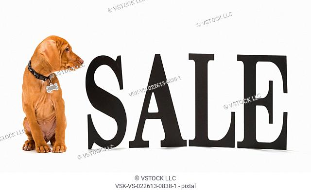 Sale sign with dog watching it
