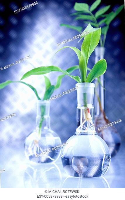 Seedlings in laboratory