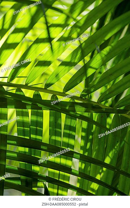 Sunlight shining through tropical foliage, full frame