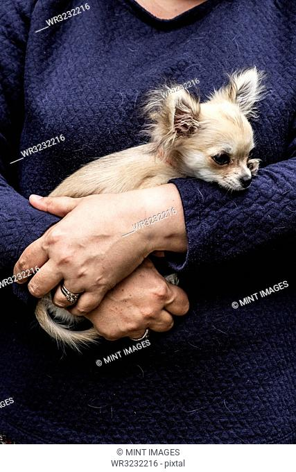 Woman holding a small dog in her arms