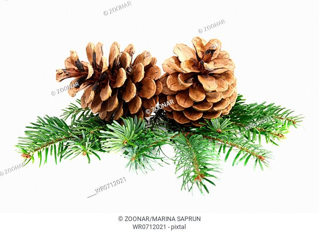Two pine cones with branch