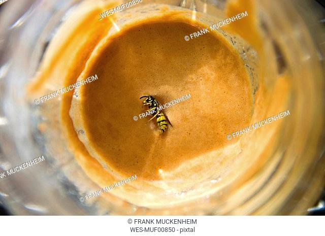 Wasp in coffee glass, elevated view