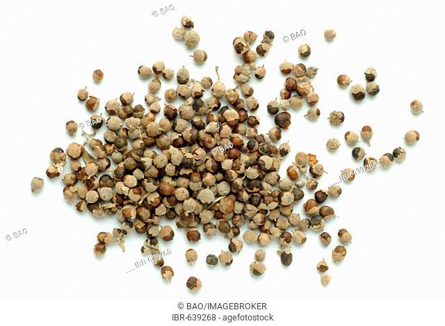 Chaste Tree or Chasteberry or Monk's Pepper (Vitex agnus-castus), seeds, medicinal plant, tea