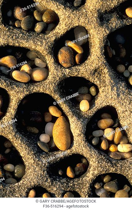 Small smooth stone rock pebbles caught in wind formed tafoni formation, Bean Hollow State Beach, San Mateo Coast, California