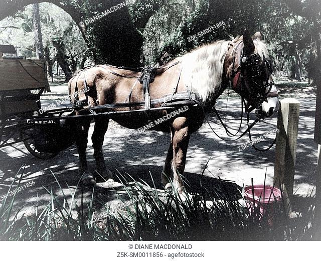 Horse and buggy at The Jekyll Island Club, Jekyll Island, Georgia