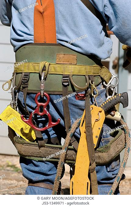 LDetail of lgger wearing climbing safety belt and tools