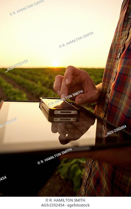 Agriculture - A young farmer in an early growth soybean field at sunset records crop data on his Apple iPhone and iPad. This represents the next generation of...