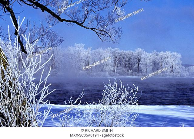 Hoar frosted trees, Ottawa River, Ontario, Canada