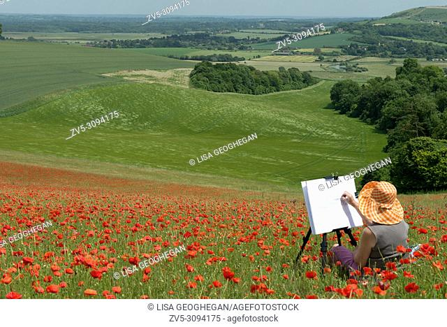 An artist at work in a field of Poppies - Papaver rhoeas on the South Downs National Park, West Sussex, England, Uk, Gb