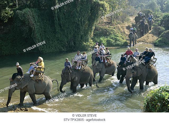 Asia, Centre, Chiang mai, Conservation, Elephant, Golden triangle, Holiday, Landmark, Riding, Thai, Thailand, Tourism, Travel, V