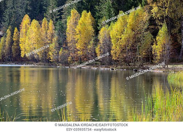 Autumn with the yellow foliage in Lake Saint Ann. romania