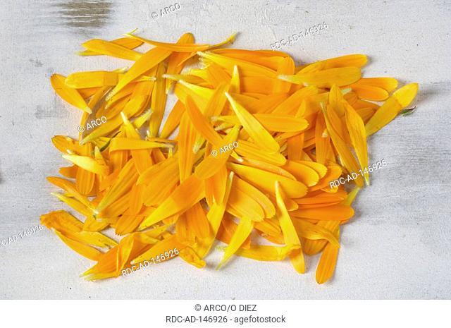 Garden Marigold petals Calendula officinalis