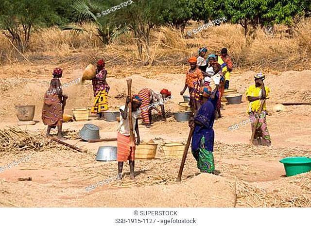 Women Making Millet Outskirts of Djenne Mali