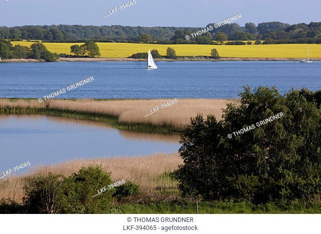 Sailing boat on the Schlei, Lindaunis, Baltc sea coast, Schleswig Holstein, Germany