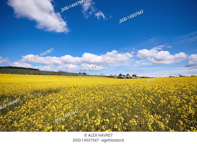 Scotland, View of field at countryside