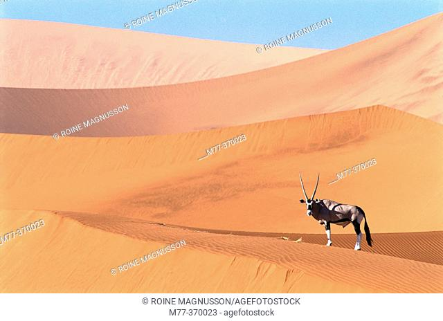 Oryx (Oryx gazella) on the dunes of Namib-Naukluft National Park. Namibia