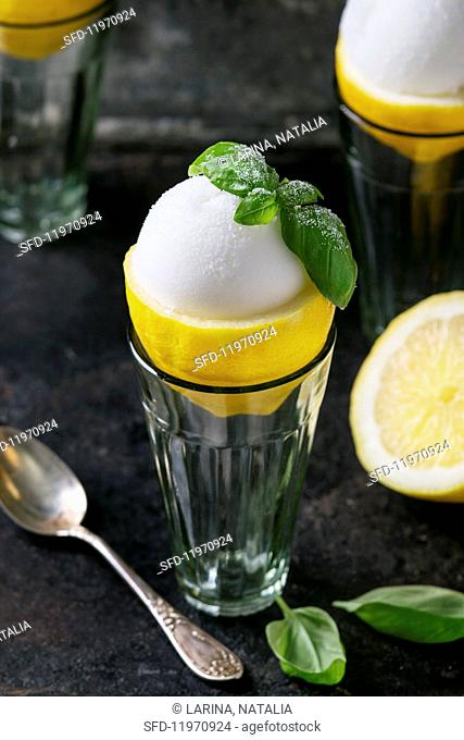 Lemon sorbet served in Apollo about lemon garnished with sugared basil leaves
