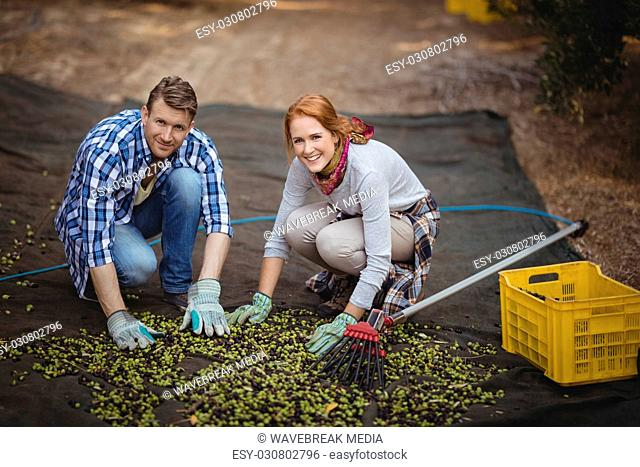 Happy couple working at olive farm