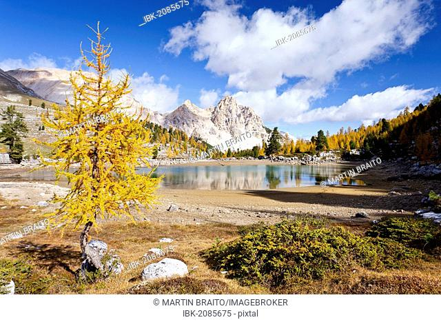 Larch tree in autumnal colours at Schottersee Lake, Mt Pareispitze or Col Bechei at back, Fanes-Sennes Nature Park, Alta Pustaria valley above Perdue, Dolomites