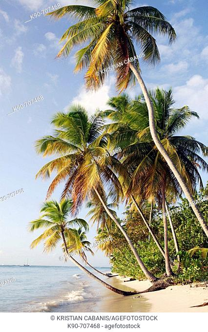 Coconut palm fringed beach at a sunny late afternoon at Pigeon Point, Tobago, Republic of Trinidad and Tobago, Americas