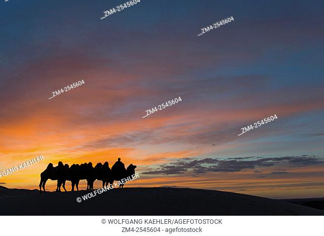 A herder with Bactrian camels is silhouetted at sunset at the Hongoryn Els sand dunes in the Gobi Desert in southern Mongolia,