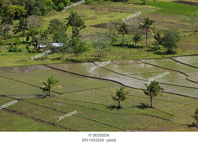 a rural house surrounded by rice fields near the chocolate hills, island of bohol, philippines