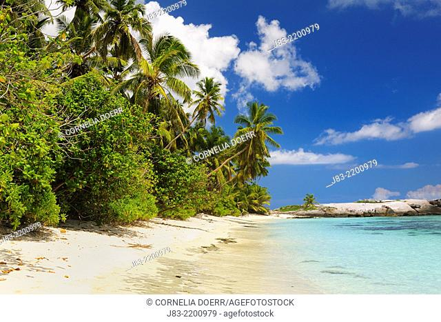 Tropical Beach with Palm Trees at Anse Forbans, Praslin, Seychelles, Indian Ocean