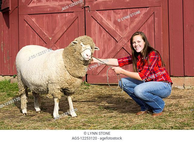 A young woman with Cormo Sheep; Lee, Massachusetts, United States of America