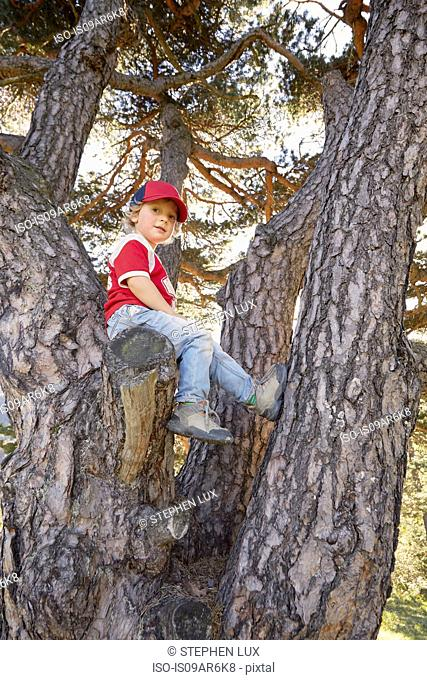 Portrait of young boy sitting in tree