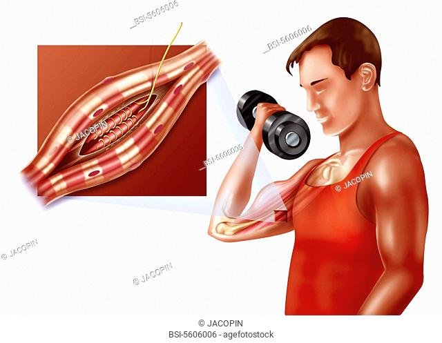 Neuromuscular spindle and proprioception. The proprioception is the perception of the position of the different parts of the body in space