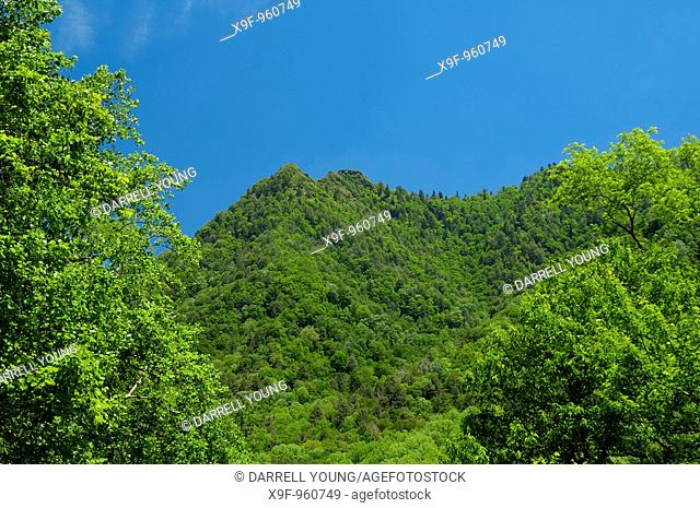 The Chimney Tops in Great Smoky Mountains National Park in the summertime