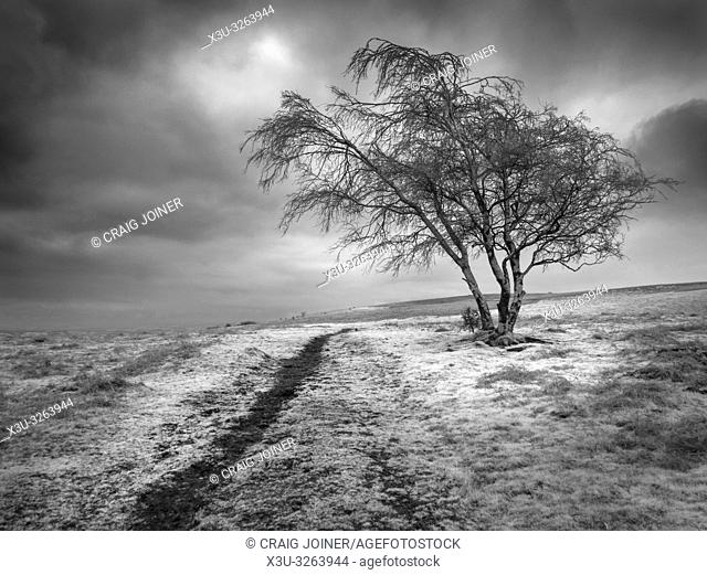 An infrared image of Black Down on the Mendip Hills in Somerset, England