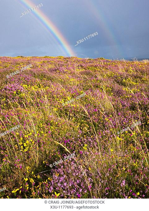August, Britain, British, Calluna Vulgaris, Cloud, Clouds, Cloudy, Country, Countryside, England, English, Europe, European, Exmoor, Flower, GB, Gorse