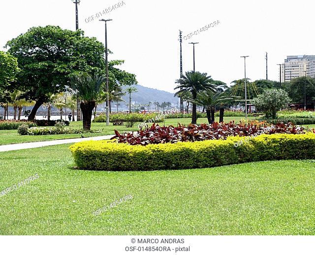 santos natural park flowers in sao paulo coast