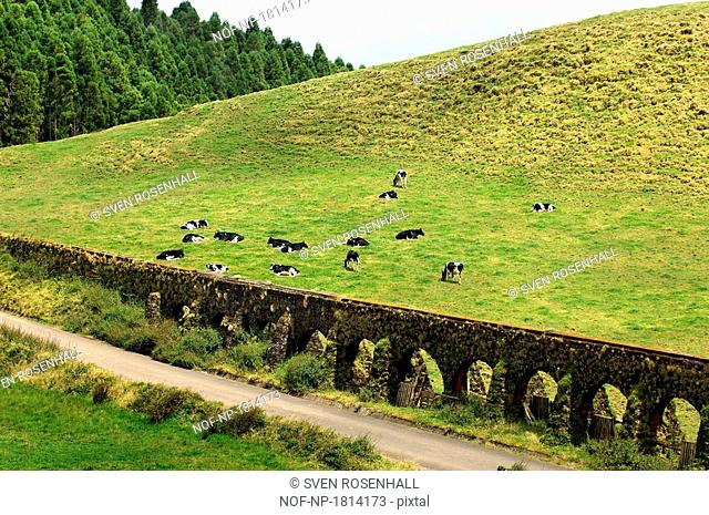 High angle view of aqueducts on a landscape, Azores, Portugal