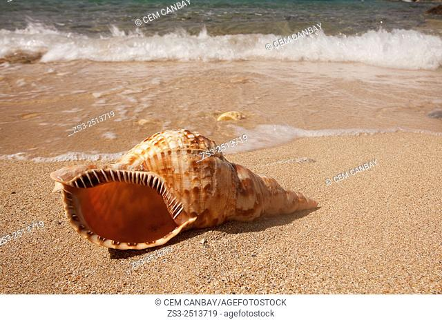 Seashell on the beach, Naxos, Cyclades Islands, Greek Islands, Greece, Greece, Europe