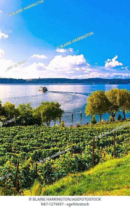 Vineyards, the medieval city of Meersburg on Lake Constance Bodensee, Baden-Württemberg, Germany