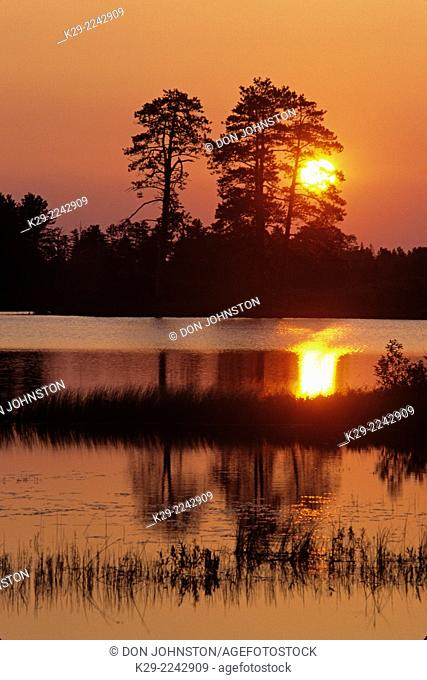 Sunrise and red pine silhouettes reflected in wetland, Seney National wildlife refuge, Michigan, USA