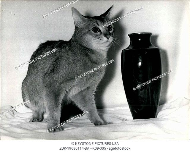 Jan. 14, 1968 - The Feline Association of France awarded Friday afternoon the 'The Prize of the President of the Republic' to Okima