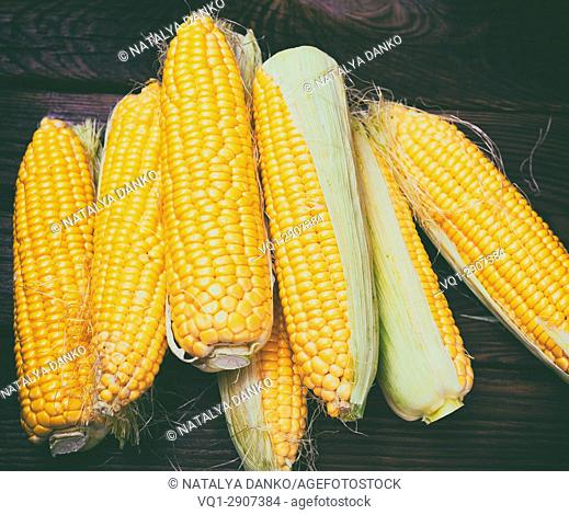 Peeled corn cobs with yellow grains, vintage toning