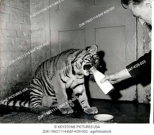 Nov. 14, 1962 - London Zoo's Hand-Reader Tiger Cub: Renee, a six-month-old tiger cub, s one of this year's proudest additions to the London Zoo