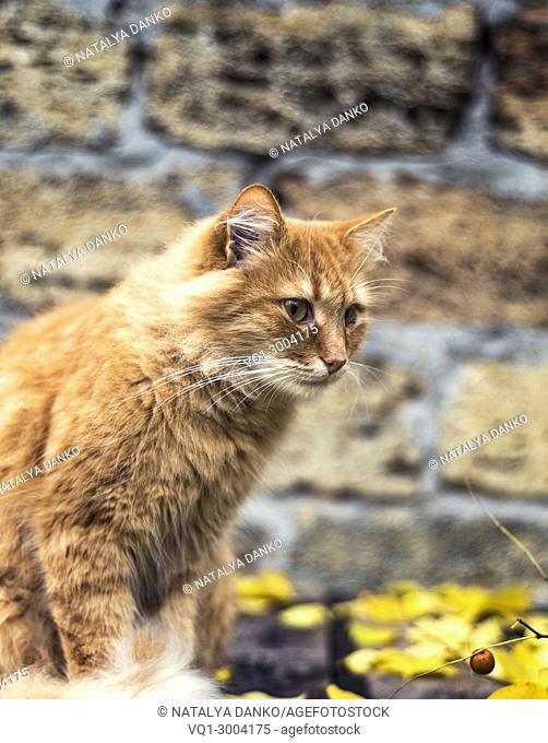 sad red cat sitting on the street in the autumn afternoon