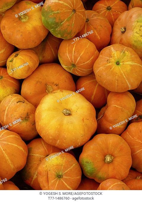Pumpkin, Cucurbita pepo pepo