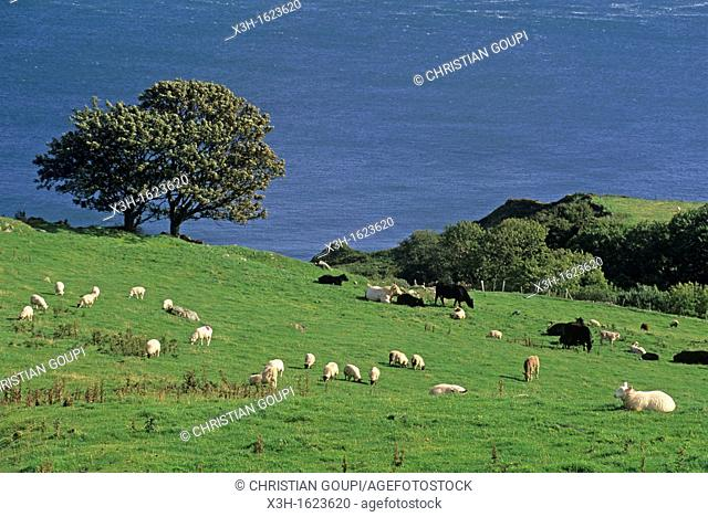 Torr Head, coast of Antrim, around Cushendun, Northern Ireland, United Kingdom, Western Europe